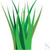 Nutgrass In Above Ground Pools